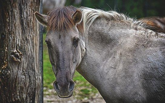 Tarpan, Horse, Animal, Nature, Animal World, Wildlife