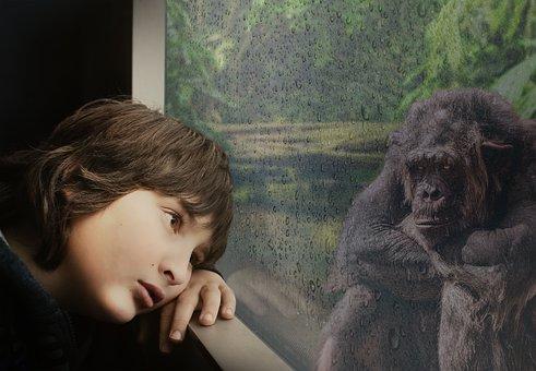 Boy, Chimpanzee, Window, Raindrop, Rainforest, Jungle