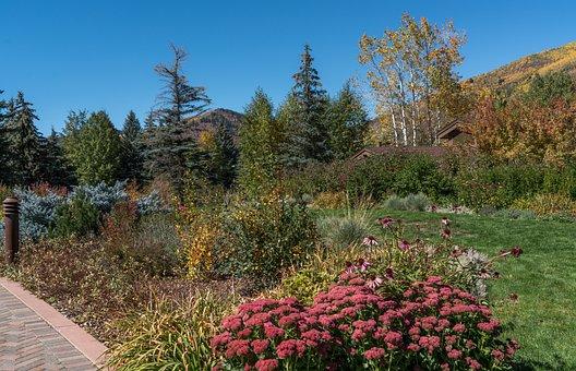 Fall, Foliage, Vail, Colorado, Mountains, Colorful