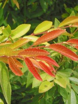 Leaves, Orange, Green, Landscape, Colorful, Plant