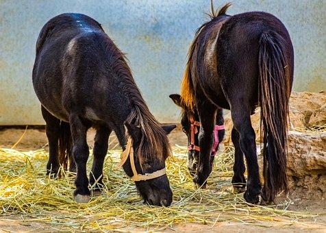 Pony, Horses, Animal, Cute, Animal Park