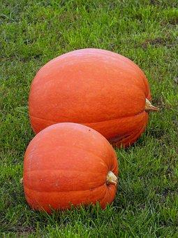Pumpkins, Orange, Pumpkin, In The Fall, Decoration