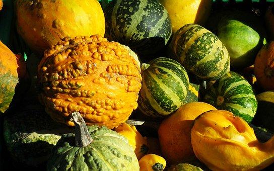 Pumpkins, Decorative, Colorful, Vegetables, Autumn