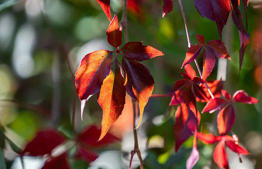 Nature, Autumn, Forest, Leaves, Leaf, Color, Colorful