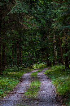 Forest, Away, Forest Path, Trees, Autumn, Trail