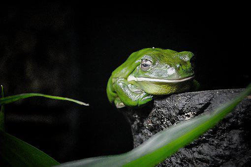 Nature, Frog, Green, Animal