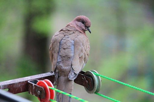 Birds, Garlasco, Bird, Throat, Tashkent, Uzbekistan