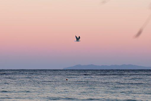 Sea, Water, Gull, Flying, Sunrise, Summer, Beach