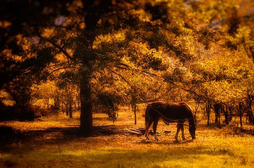 Horse, Sunset, Forest, Silhouette, Animal, Nature