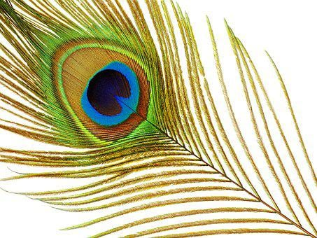 Peacock, Feather, Plumage, Colorful, Iridescent
