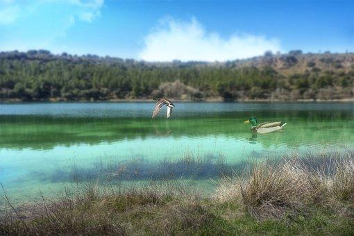 Laguna, Green, Ducks, Nature, Landscape