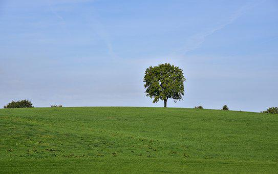 Tree, Horizon, Sky, Nature, Landscape, Summer, Meadow