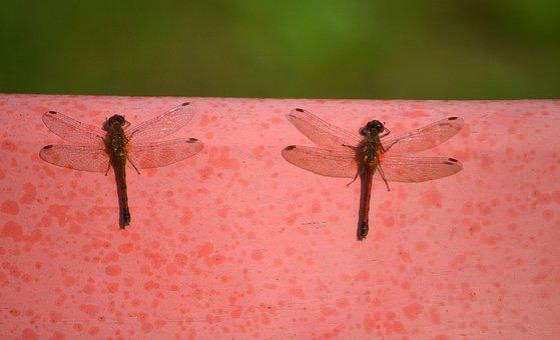 Insects, Invertebrates, Male, Female, Nature, Antennae