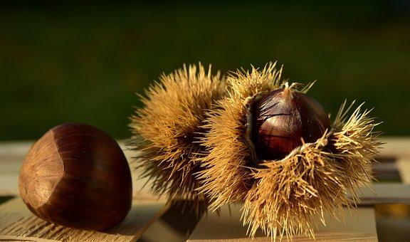 Maroni, Chestnut, Autumn, Prickly, Spur, Fruit