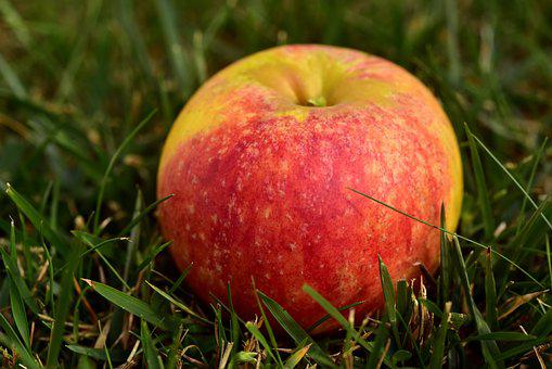 Apple, Meadow, Fruit, Nature, Healthy, Grass, Orchard