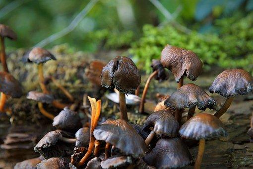 Autumn, Mushrooms, Brown, Moist
