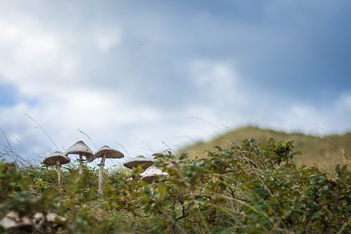 Mushroom, Autumn, Nature, Mushrooms, Dunes, Clouds