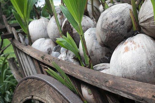 Wagon, Palm, Nature, Farm, Travel, Tropical