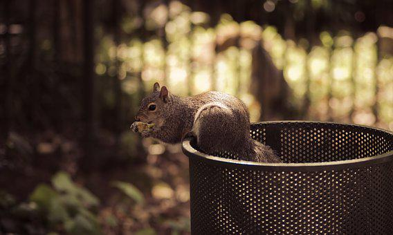 Squirrel, Dustbin, Scavenging, Park, Outdoors, Eating