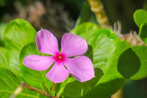 Flower, Plant, Nature, Bloom, Fuchsia, Flowers, Light