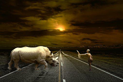Road, Path, Friendship, Animal, Man, Rhinoceros, Boy