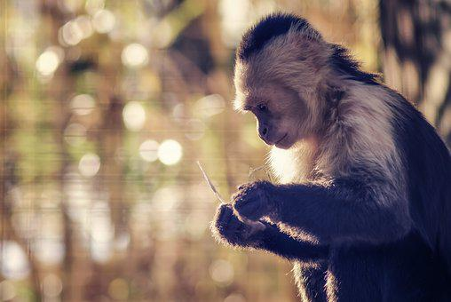 Monkey, Mood, Zoo, Ponder, Think, Thought, Study, Sit