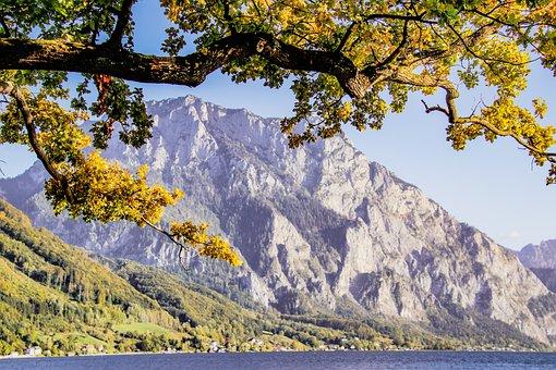 Spring, Mountain, Traunstein, Lake, Tree