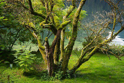Lake, Bank, Waters, Tree, Moss, Bergsee, Austria