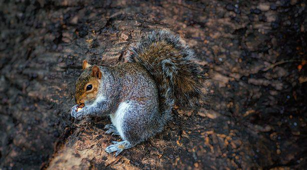 Squirrel, Tree, Eating, Nuts, Nature, Animal, Rodent