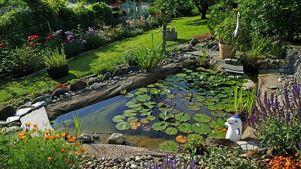Nature, Garden, Pond, Lily Pad, Flowers, Sun, Tulips