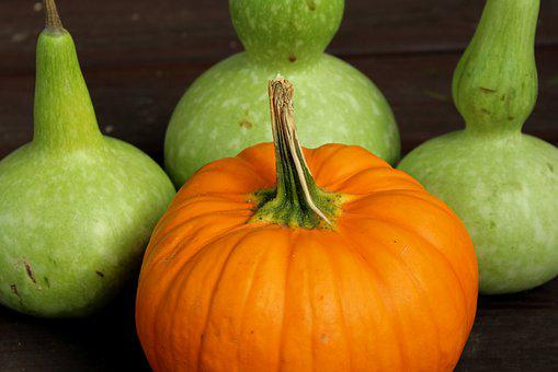 Pumpkin, Calabash, Collections, Autumn, Vegetables
