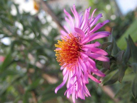 Wild Flower, Flower, Violet, Pollens, Macro, Zoom