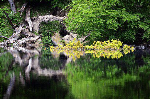 Pond, Lake, Forest, Water, Nature, Landscape, Park