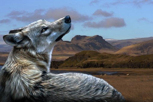 Wolf, View, Mountains, Landscape, Predator, Nature