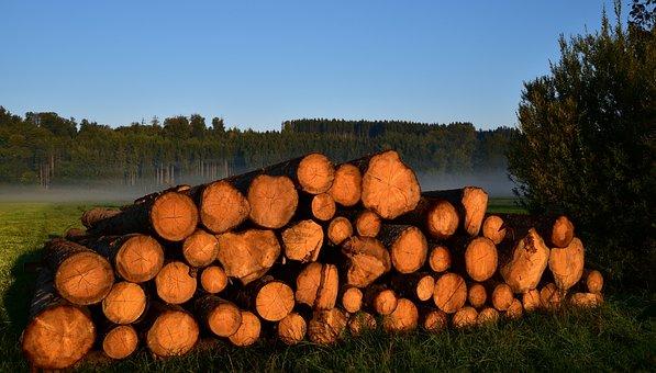 Wood, Holzstapel, Firewood, Autumn, Morgenstimmung