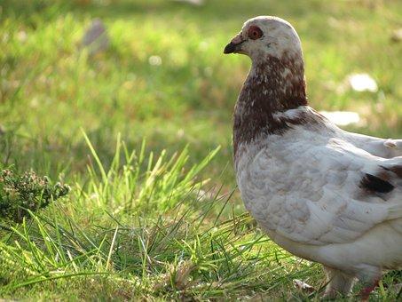 Dove, Park, Bird, Feather, Outdoors, Summer