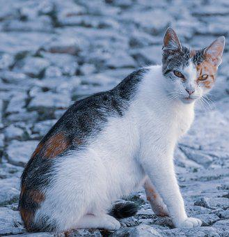 Cat, Cute, Pet, Animal, Furry, Kitty, Young, Curious