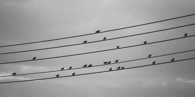 Birds On A Wire, Sky, Cloudy, Autumn