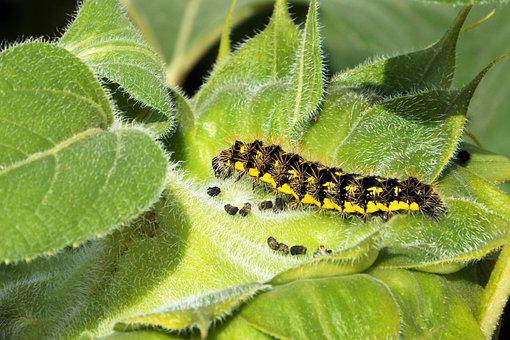 Caterpillar, Yellow, Insect, Nature, Colorful, Green