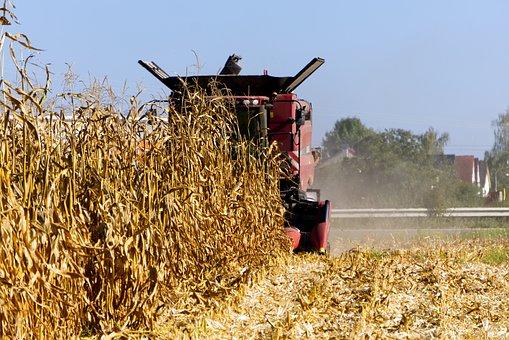 Corn, Harvest, Combine Harvester, Nature, Vegetables