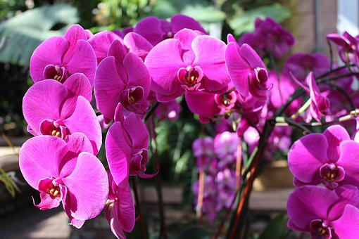 Orchid, Purple, Bloom, Plant, Nature, Orchids, Exotic