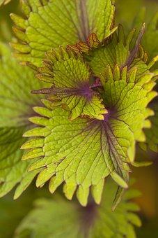 Nature, Flower, Plant, Flora, Closeup, Natural, Macro