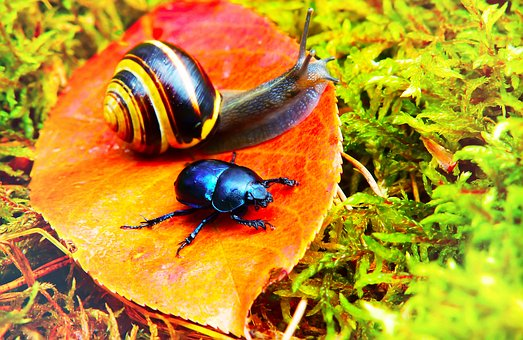 Forest Beetle, Insect, Snail, Moss, Leaf, Autumn