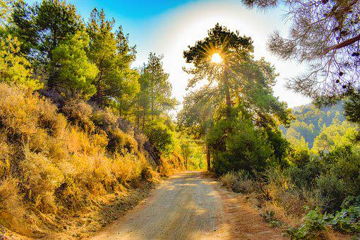 Dirt Road, Forest, Morning, Light, Nature, Woods, Path