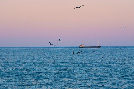 Sea, Times, Seagull, Free