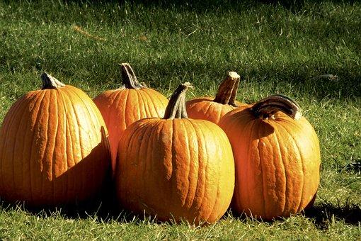 Pumpkins, Squash, Orange, Sunlight, Halloween, Autumn