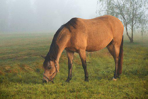 Horse, Coupling, Pasture, Landscape, Morning, Fog