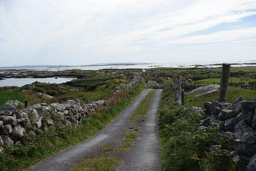 Ireland, Galway, Bay, Sheep, Nature, Sea, Only