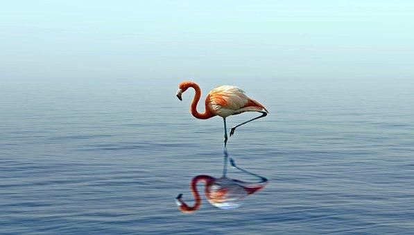 Bird, Water, Nature, Animal, Lake, Plumage, Feather