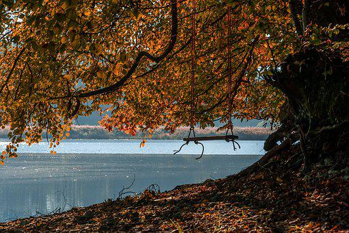 Nature, Landscape, Swing, Lake, Waters, Autumn
